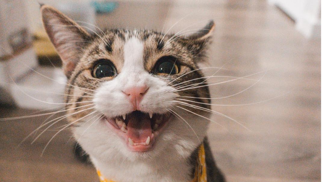FRIEND -  Curious Kitten